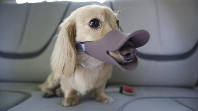 deguisement-chien-2