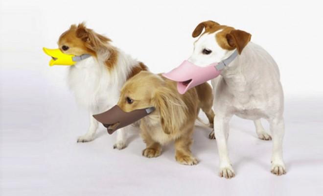 deguisement-chien