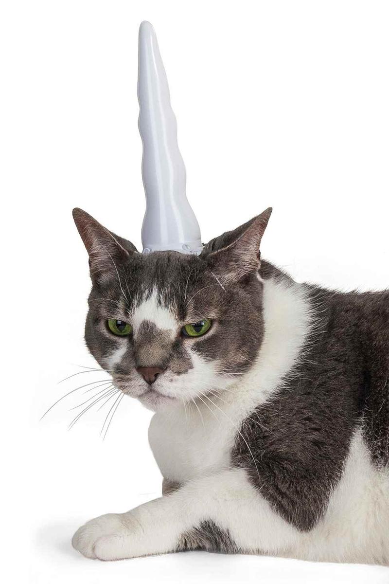licorne-chat-2