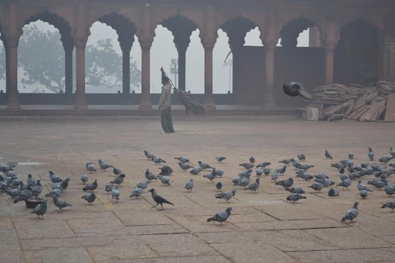 inde--Jamma-Masjid