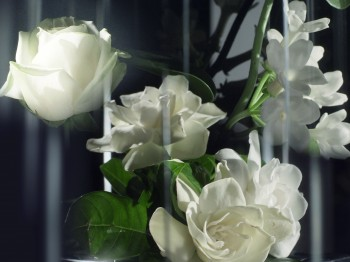 ACCORD_FLORAL_ROSE_BULGARE_GARDENIA_CMJN