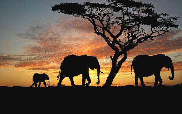 manchette-bollystud-bijou-grand-coeur-elephant-family