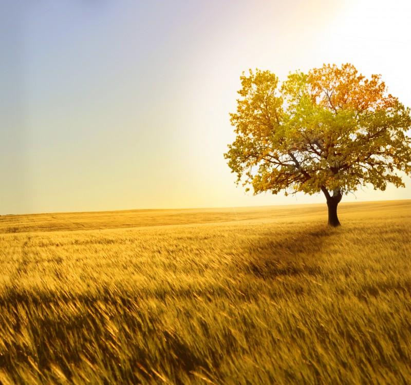 saisons d'eden arbre jaune
