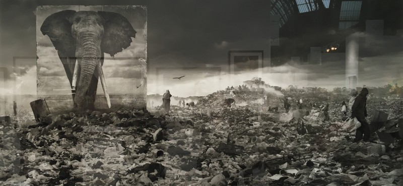 Nick Brandt, Wasteland with Elephant, 2015, A. galerie