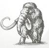 mamont mammouth