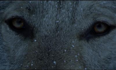 Tudor-wolf