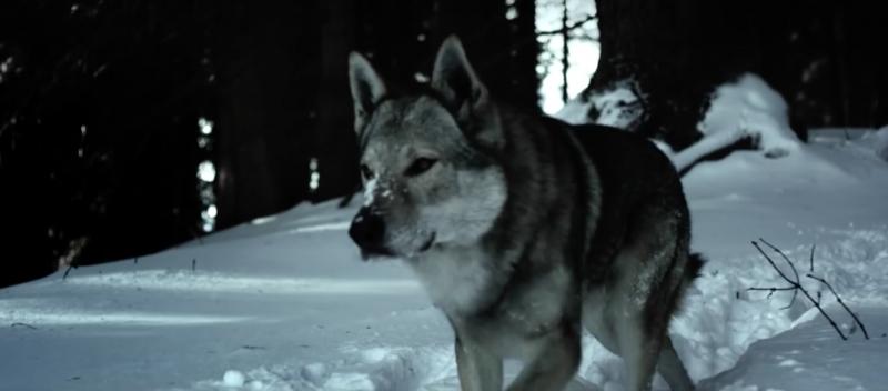 tudor-heritage-ranger-wolf 2