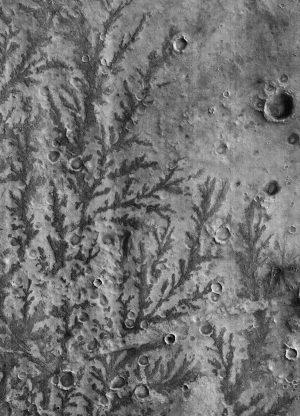 guerlain-exposition-matieres-terre-Formes-foliesques-sur-le-fond-du-cratère-Xavier-Barral