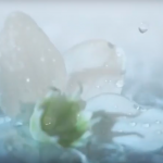 goutte-eau-dissey-peau-jasmin