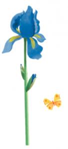 iris-elu-fleur-de-lannee-fragonard 2