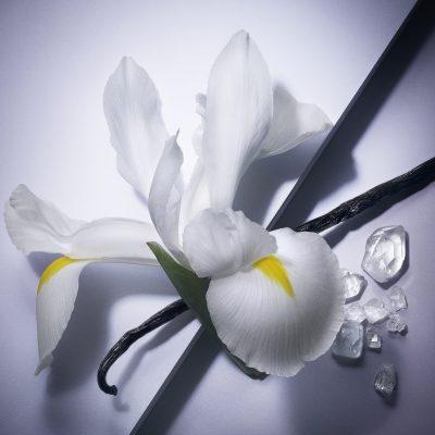 iris-elu-fleur-de-lannee-fragonard-absolu-iris-feve-tonka
