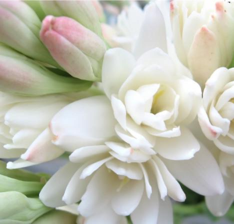 esthederm-parfum-soleil-sur-peau-notes-coeur-bouquet-tubereuses