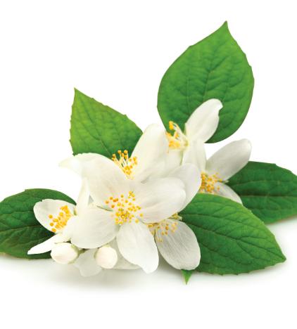 esthederm-parfum-soleil-sur-peau-notes-coeur-jasmin-inde