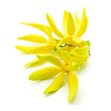 esthederm-parfum-soleil-sur-peau-notes-coeur-ylang-comores