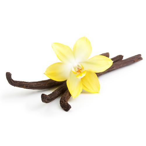 esthederm-parfum-soleil-sur-peau-notes-fond-vanille