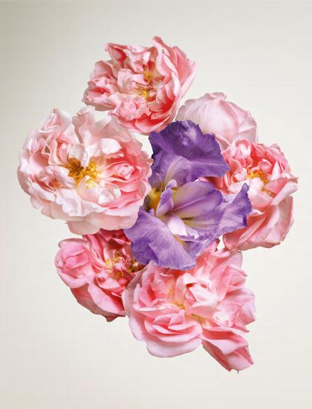 parfums-louis-vuitton-voyage-meme-peau-rose-des-vents-2