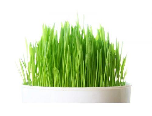 la-detox-par-les-plantes-naturellement-boosters-cjuice-sos-bikini-hibiscus-sos-antioxydant-herbe-de-ble