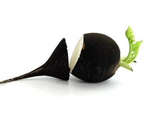 la-detox-par-les-plantes-naturellement-boosters-cjuice-sos-lendemain-de-fete-radis-noir
