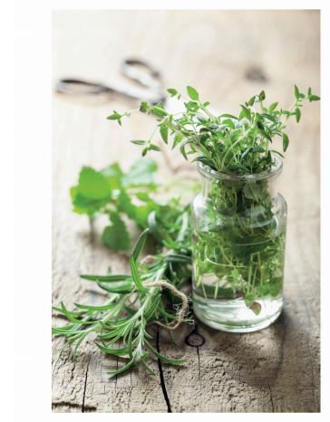 la-detox-par-les-plantes-naturellement