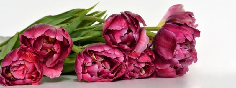 un-petit-massage-pour-la-fete-des-meres-unizen-fleurs