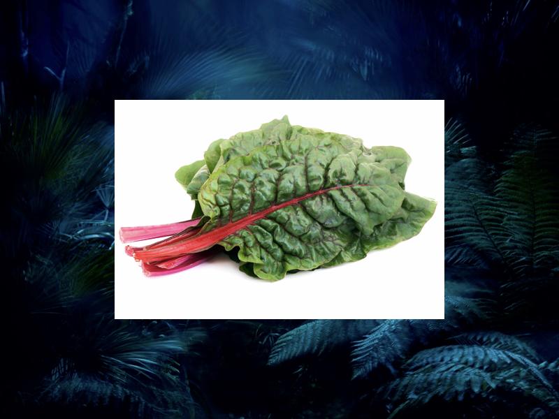 revelez-votre-instinct-avec-aura-mugler-feuille-rhubarbe 2