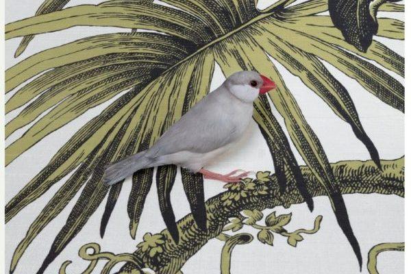 avec-vetyverio-diptyque-transporte-haiti-oiseau