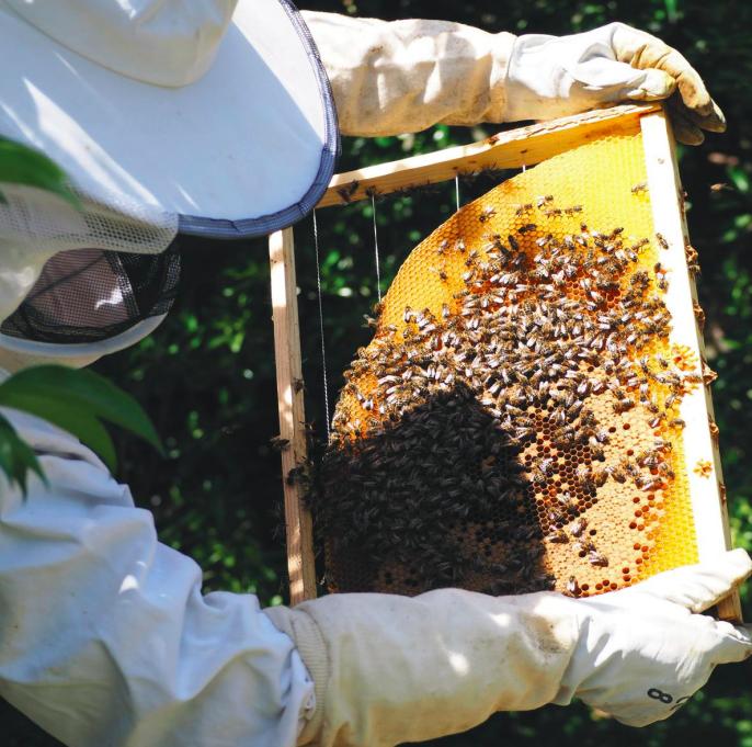 voulez-vous-clicher-avec-moi-ruches